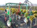 Globus Pruning Machine For Stemmed Bushes