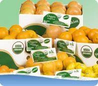 Organic Citrus Orange